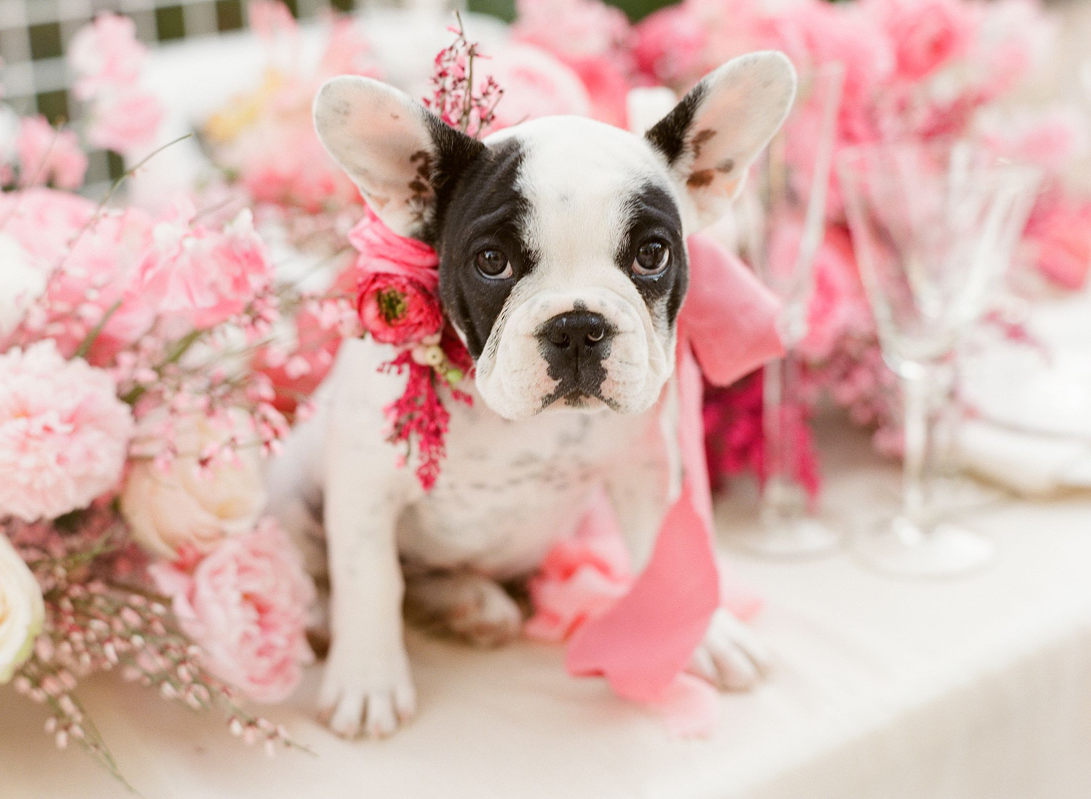 Pink Ombre Wedding Inspiration on Style Me Pretty - Royal Palms Wedding - Scottsdale Wedding - Ashley Baumgartner - Bloom and Blueprint - Wedding Puppies - Bulldog Puppies_0009.jpg
