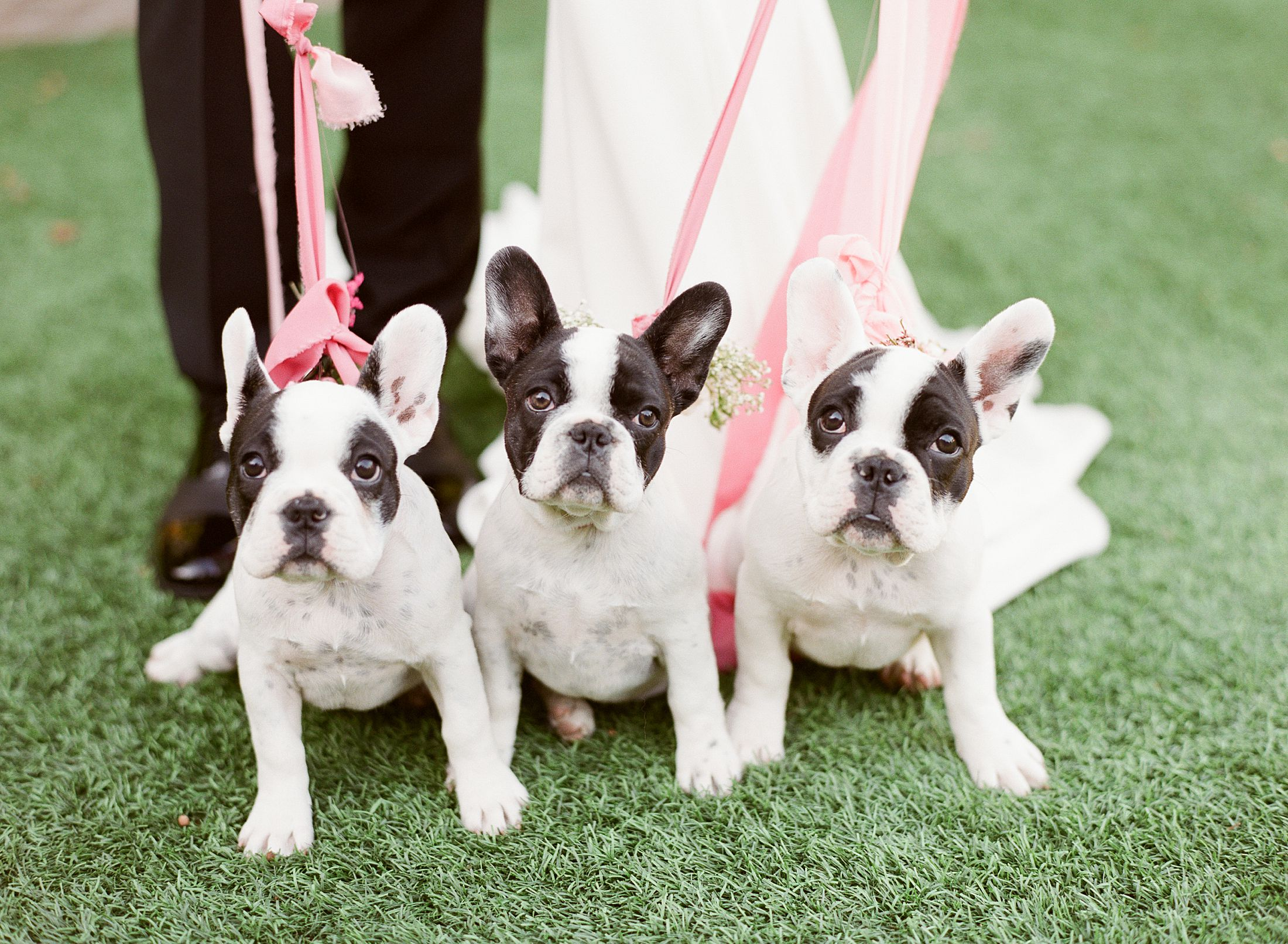 Pink Ombre Wedding Inspiration on Style Me Pretty - Royal Palms Wedding - Scottsdale Wedding - Ashley Baumgartner - Bloom and Blueprint - Wedding Puppies - Bulldog Puppies_0025.jpg