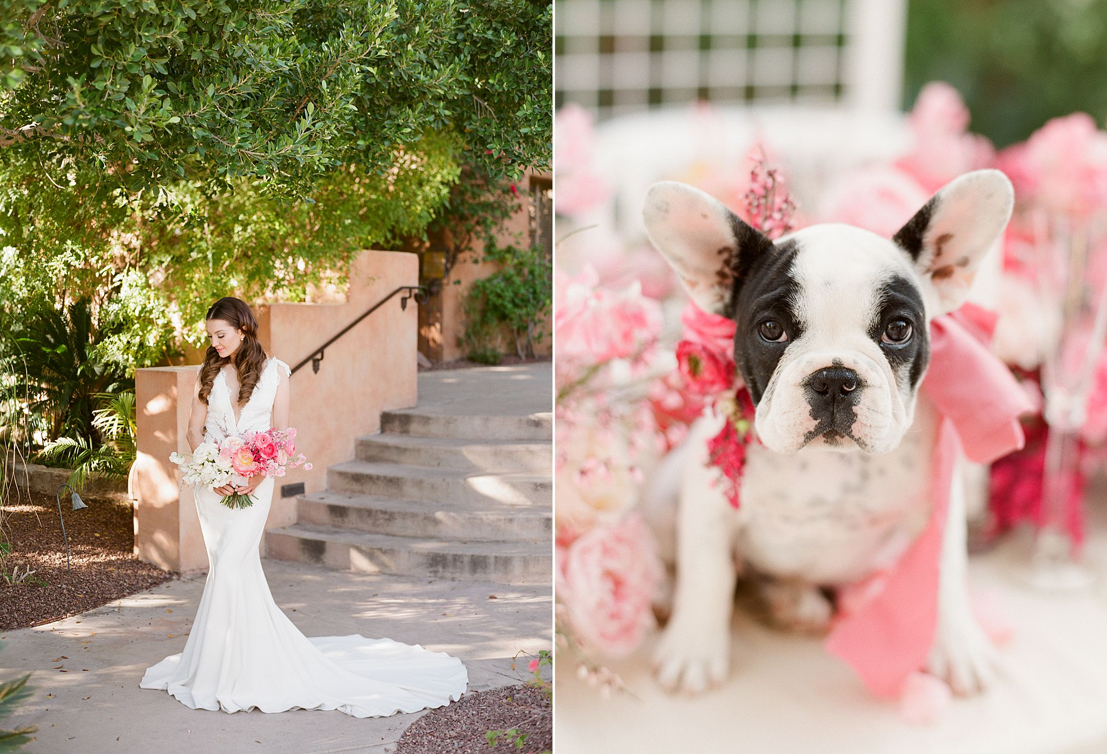 Pink Ombre Wedding Inspiration on Style Me Pretty - Royal Palms Wedding - Scottsdale Wedding - Ashley Baumgartner - Bloom and Blueprint - Wedding Puppies - Bulldog Puppies_0026.jpg