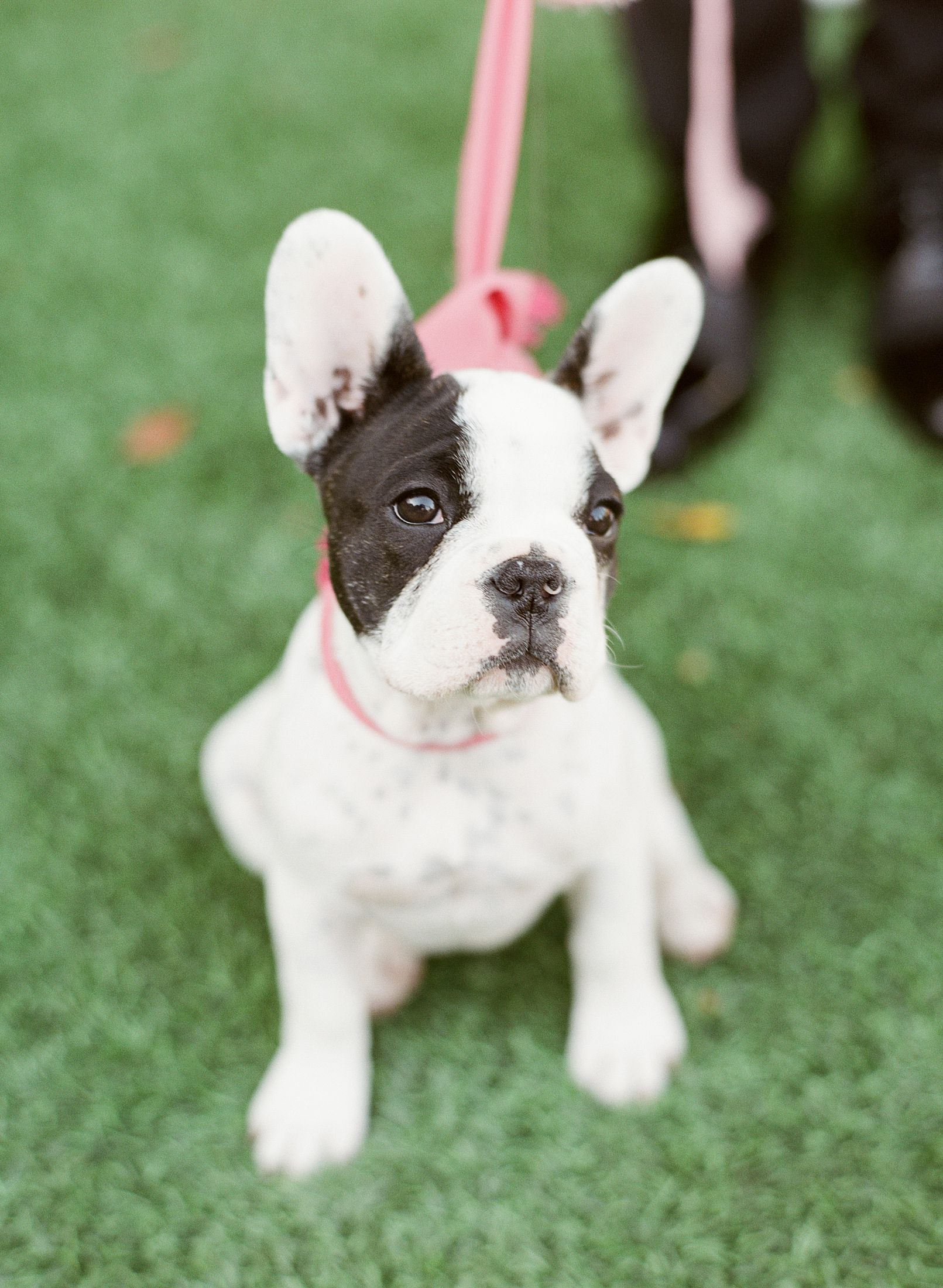 Pink Ombre Wedding Inspiration on Style Me Pretty - Royal Palms Wedding - Scottsdale Wedding - Ashley Baumgartner - Bloom and Blueprint - Wedding Puppies - Bulldog Puppies_0037.jpg