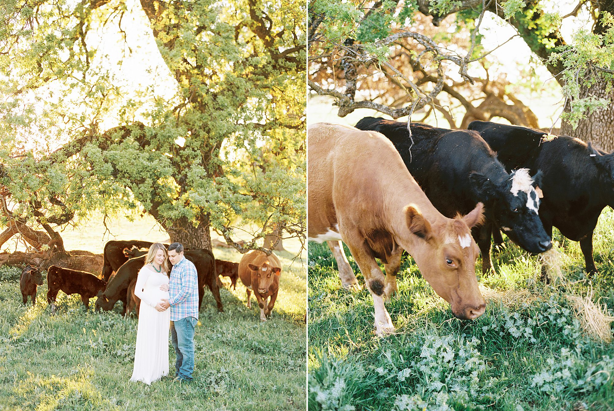Sheridan Maternity Session - Lexie and Nick - Sacramento Maternity Photos by Ashley Baumgartner - Farmland, 4H Maternity with Cows_0003.jpg