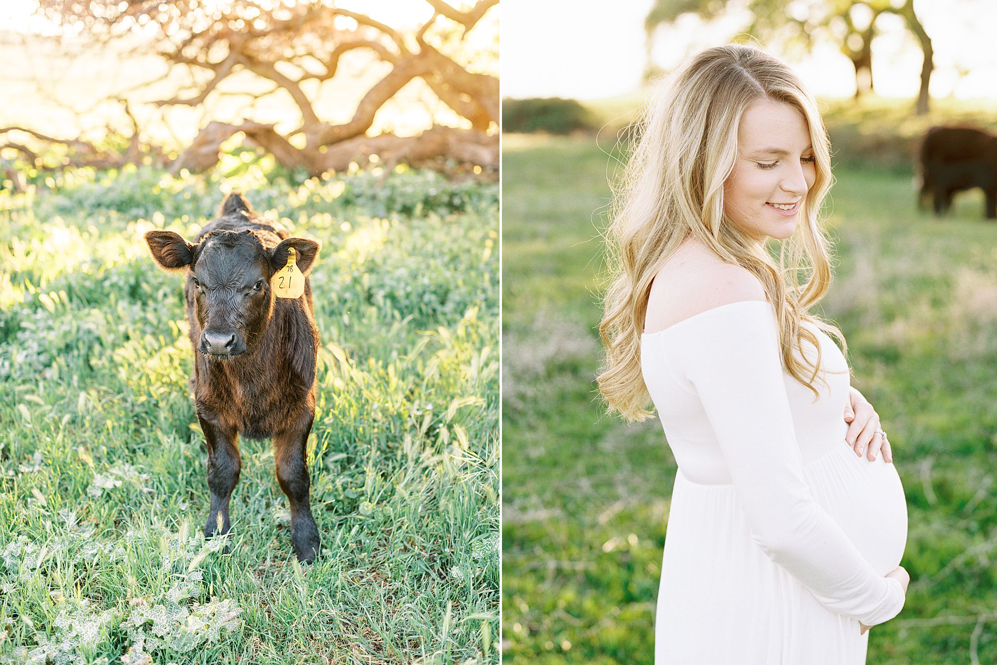 Sheridan Maternity Session - Lexie and Nick - Sacramento Maternity Photos by Ashley Baumgartner - Farmland, 4H Maternity with Cows_0011.jpg