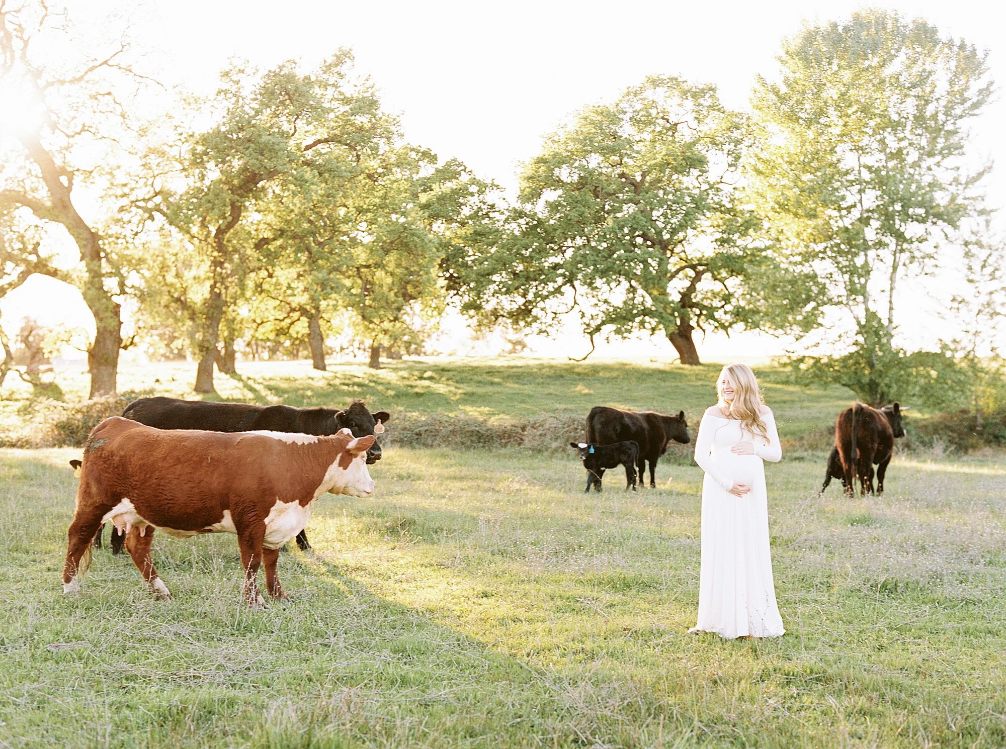 Sheridan Maternity Session - Lexie and Nick - Sacramento Maternity Photos by Ashley Baumgartner - Farmland, 4H Maternity with Cows_0012.jpg
