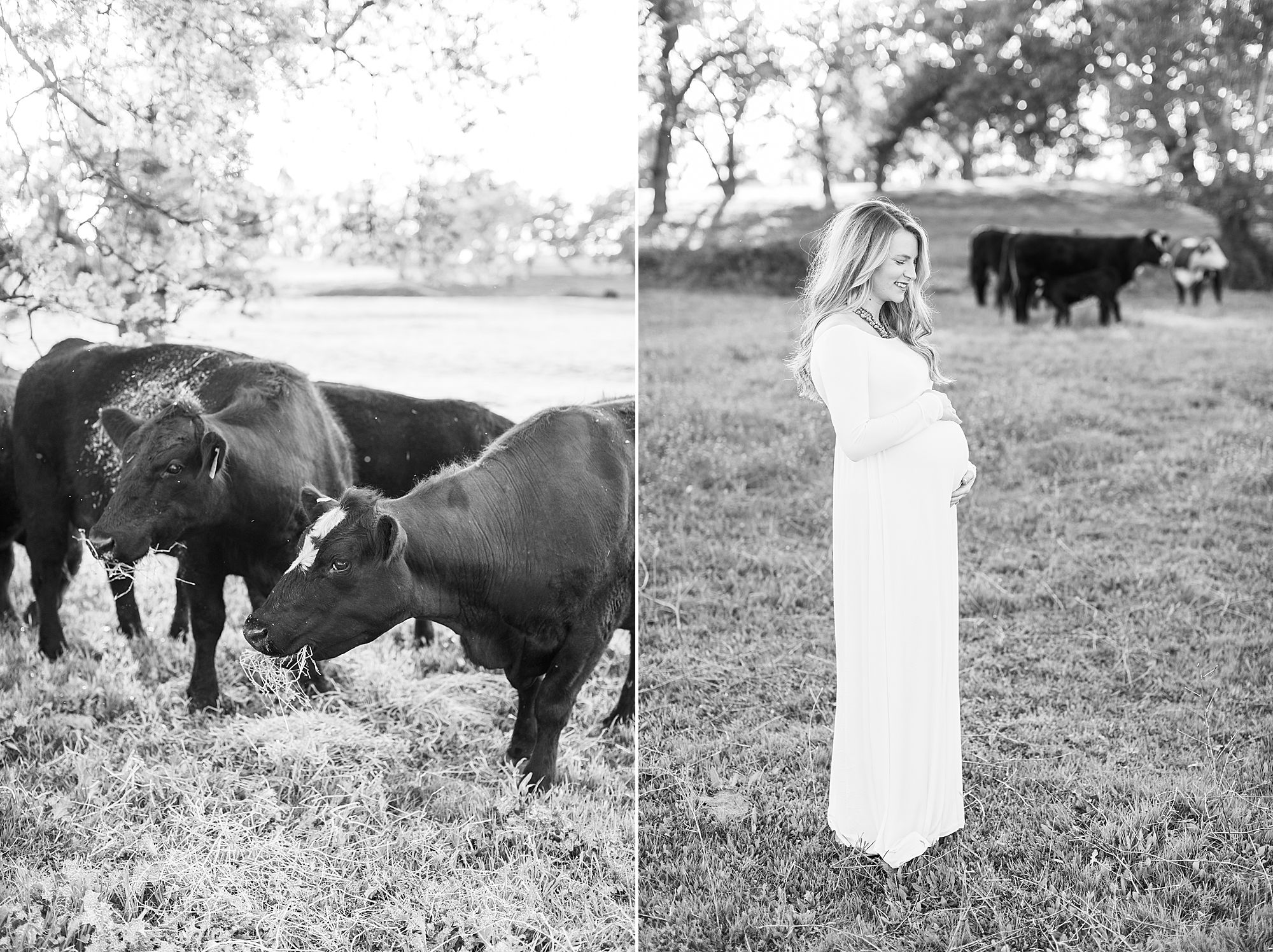 Sheridan Maternity Session - Lexie and Nick - Sacramento Maternity Photos by Ashley Baumgartner - Farmland, 4H Maternity with Cows_0013.jpg